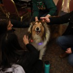 Therapy Dog Being Pet